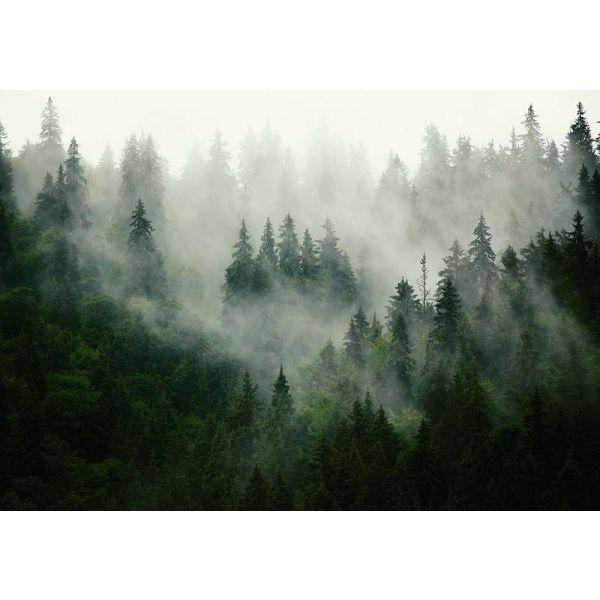 Fototapet decorativ - Respira brazii - 368x254cm/Vlies