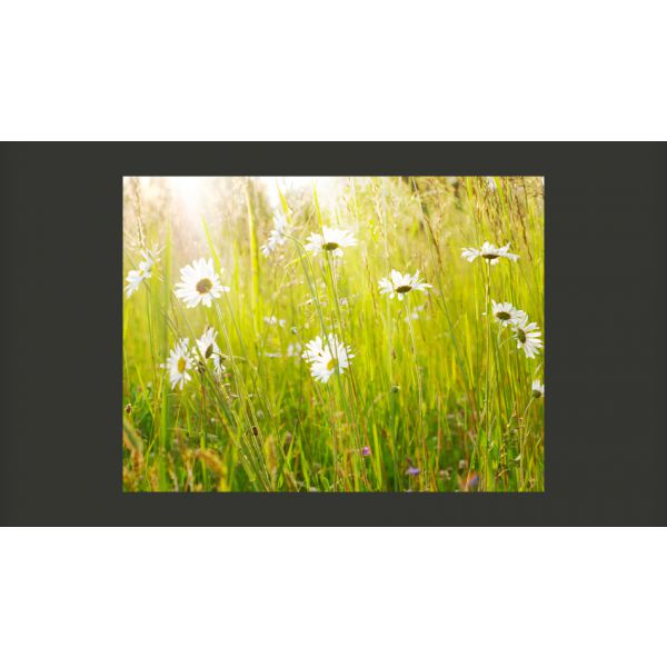Fototapet decorativ  - Flori de camp/ Vlies/350x270