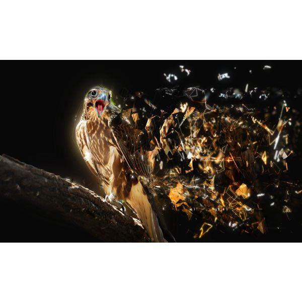 Tablouri fotoluminoase -Animale / Pasari