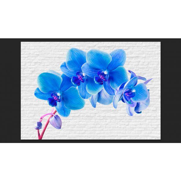 Fototapet decorativ - Orchidee - VLIES / 350x270cm