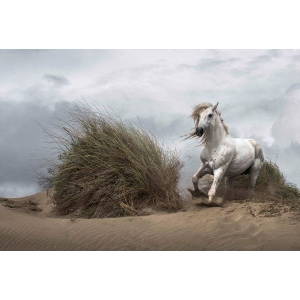 Fototapet decorativ - Animale - 384x260cm/8p./Hartie