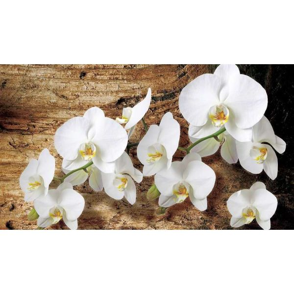 Fototapet floral - Orckidee - 368x254 /4 p/Vlies
