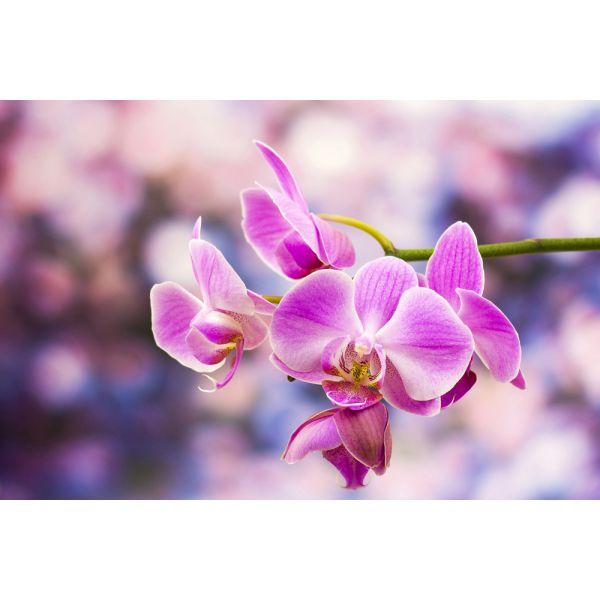 Tablouri  fotoluminoase - Floral